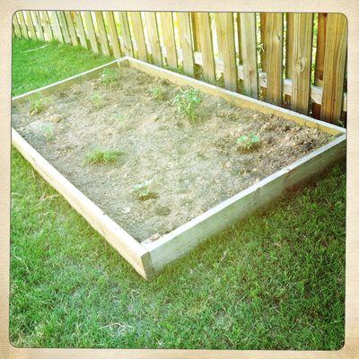 Garden planted